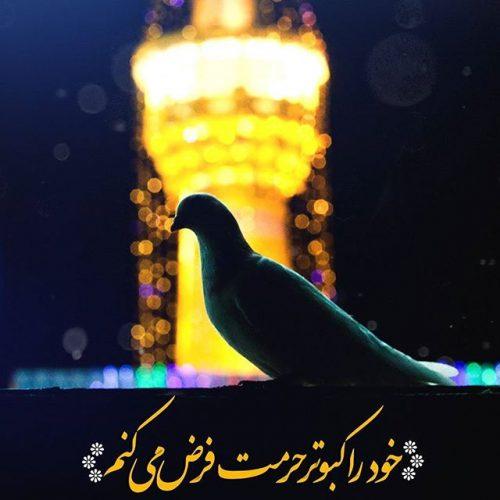 عکس نوشته کبوتر امام رضا + متن تبریک ولادت