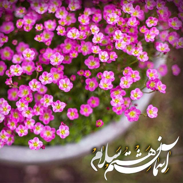 عکس و متن تبریک تولد امام رضا 98