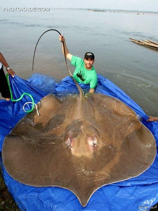 عکس موجودات جهش یافته بزرگ,عکس کوجودات غول پیکر,عکس حیوانات در اندازه غیرطبیعی,عکس واقعی از اندازه بزرگ حیوانات معمولی,عکس حیوانات بزرگ و ترسناک,عکس حیوانات
