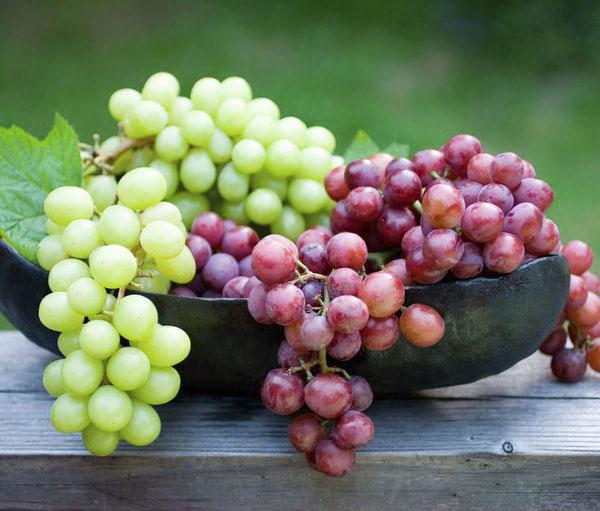 فواید انگور برای بدن چیست
