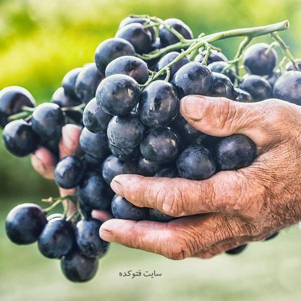 فواید و مضرات انگور سیاه