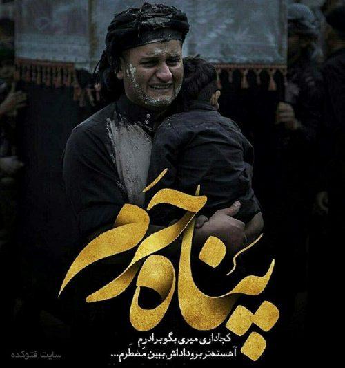 عکس اربعین در حرم امام حسین