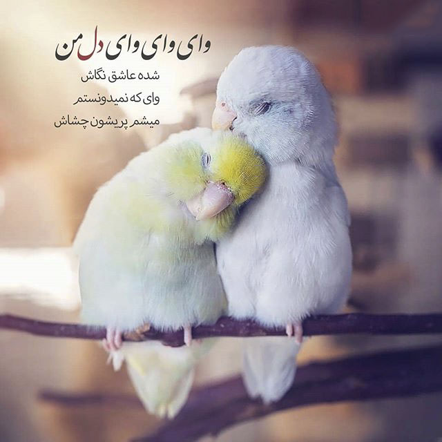 عکس خاص پروفایل عاشقانه پرنده ها