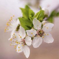 جملات و متن قشنگ درباره بهار و شکوفه عاشقانه احساسی