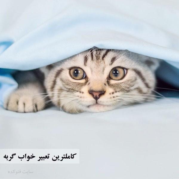 تعبیر خواب دیدن گربه