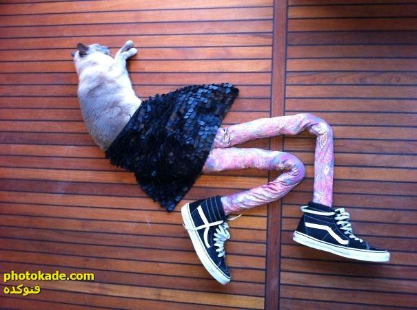 عکس های جالب ، عکس خنده دار ، عکس های جالب ، عکس گربه ملوس ، عکس های لباس گربه ملوس ، عکس های جالب از گربه ها ، عکس  گربه های لباس پوش، عکس از لباس های گربه ها ، عکس های خنده دار ، عکس خنده دار از گربه ها ، عکس لباس گربه ها ، عکس های