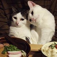 عکس گربه | عکس عاشقانه گربه ها
