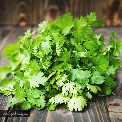 گیاهان طب سنتی برای دیابت با گشنیز