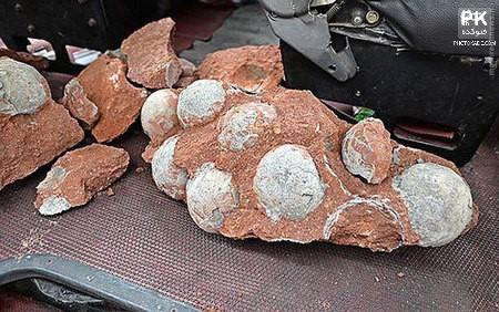 عکس های کشف تخم دایناسور,تخم دایناسور,کشف فسیل تخم دایناسور,تصاویر جدید از تخم مرغ های دایناسور,تخم های کشف شده از دایناسورها در چین,رکورد کشف تخم دایناسور