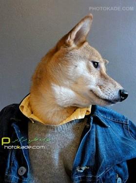 عکسهای خنده دار سگ لباس پوش