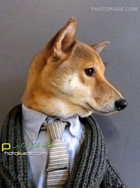 عکسهای خنده دار سگ لباس پوش,عکس کت شلوار تن سگ,عکس جالب و خنده دار از سگ خوش لباس,لباس پوشیدن سگ خوشگل,عکس باحال از سگ لباس,لباس سگ,عکس خنده دار حیوانات,s'