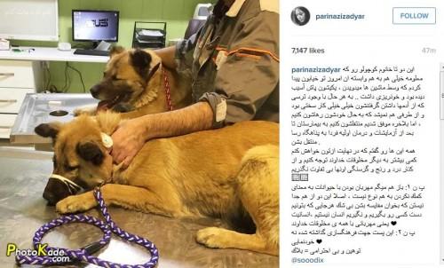 ماجرای دوتا سگی که پریناز ایزدیار نجات داد,عکس دوتا سگی که پریناز ایزدیار نجاتشون داد,پست فرهنگی بازیگر زن,پست فرهنگی نه خودنمایی پریناز ایزدیار,کار انسانس بازیگر زن