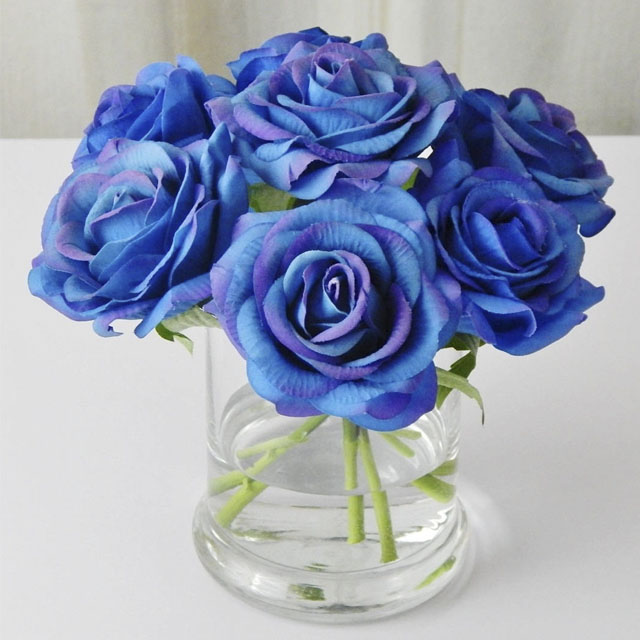 عکس گل رز آبی برای پروفایل