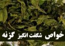gazaneh-photokade-com (1)