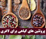 پروتئین های گیاهی برای لاغری و کاهش وزن