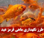 طرز نگهداری ماهی قرمز عید