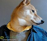 dog-style-clothe-photokade (11)