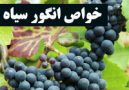 خواص انگور سیاه چیست