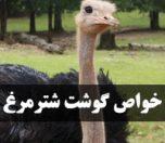 Ostrichmeat-photokade (1)