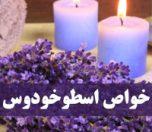 Lavender-photokade-com (1)