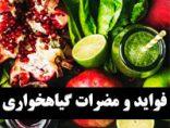 Vegetarian-vf-photokade (1)