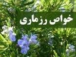 khavase-rozmari-photokade-com (2)