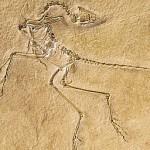 ادعای وحود خودرو در میلیون ها سال پیش,کشف فسیل رد خودرو های سنگین در 14 میلیون سال قبل,وجود خودرو در میلیون ها سال پیش در زمین,اداعای عجیب باستان شناس