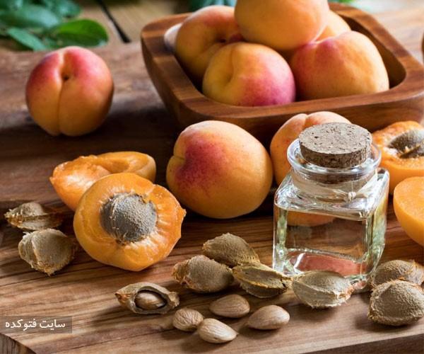 هسته زردآلو از از میوه های خطرناک برای سلامتی بدن انسان