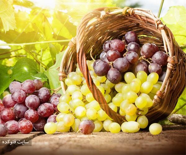 انگور از میوه های مضر