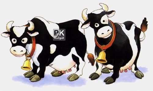 فواید گاو بودن برنده جایزه بهترین انشاء,گاو بودن انسانها,اگر انسان گاو باشد,بهترین انشا ایران در مورد گاو بودن,نگار انشای زیبا از گاو بودن مردن,فایده گاو