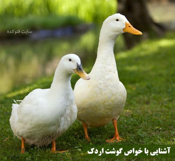 خاصیت گوشت اردک