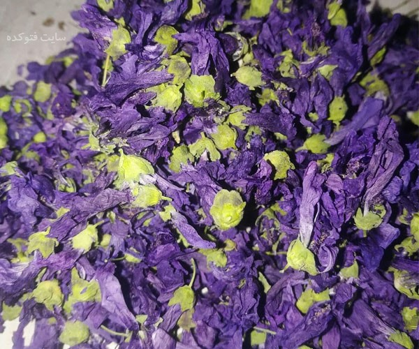 golekhatmi photokade com 2 - خواص گل ختمی | ۲۶ خاصیت ختمی برای پوست و مو سلامتی