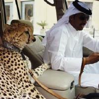 عکس حیوانات خانگی بچه پولدارهای عرب