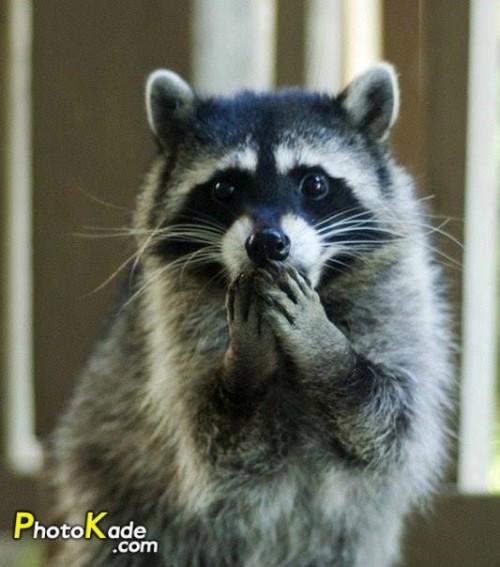 عکس جالب تعجب حیوانات,تعجب خنده دار حیوانات,عکس جالب از حیوانات در شرایط خاص,عکسهای طنز و جالب از حیواناتی که تعجب میکنند,تصاویر حیوانات که میترسند