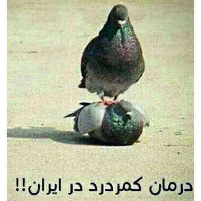 عکس طنز خنده دار