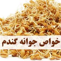 خواص جوانه گندم برای چاقی، لاغری و سلامتی