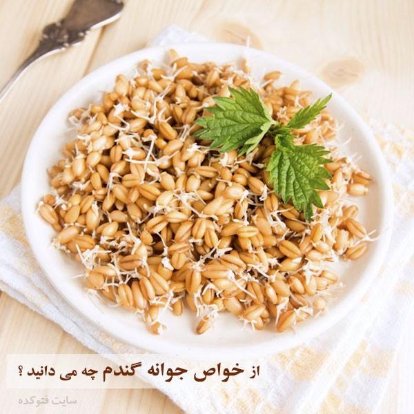 خواص جوانه گندم در بدنسازی و سلامتی