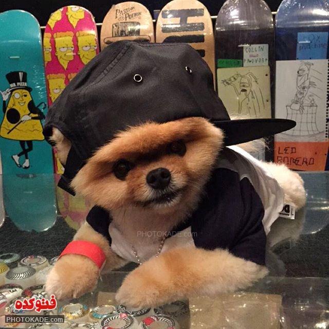 عکس های سگ خوشگل و پرطرفدار,عکس سگ خوشگل بنام جف,زیباترین سگ واقعی زنده,عکس نزاد خاص از سگ خوشگل و دوست داشتنی,قشنگ ترین سگ دنیا,عکس متفاوت از یک سگ زیبا,سگ