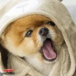 عکس های سگ خوشگل و پرطرفدار