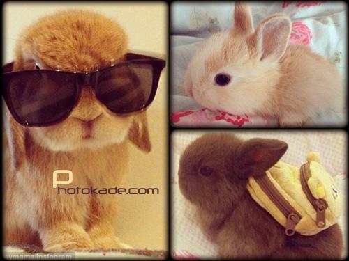 عکس خرگوش های زیبا