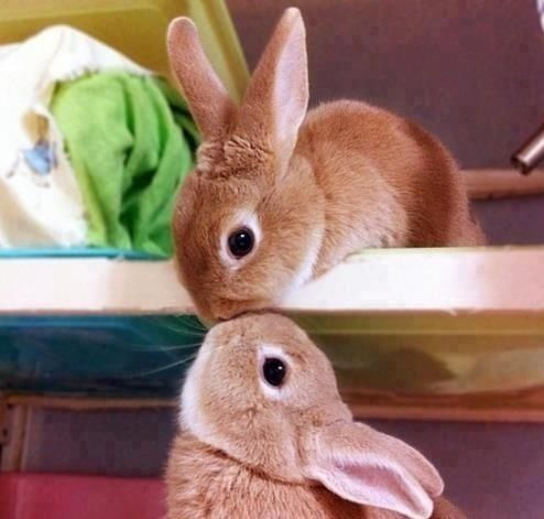 عکس خرگوش های زیبا,عکس خرگوش,عکس های خرگوش,عکس خرگوش بامزه,عکسهای بامزه حیوانات,عکس خرگوش سفید,عکس خرگوش خونگی,u;s ov',a,خرگوش ها,عکس بچه خرگوش,تصویر خرگوش