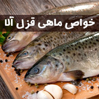 خواص ماهی قزل آلا | 15 خاصیت ماهی قزل آلا برای سلامتی