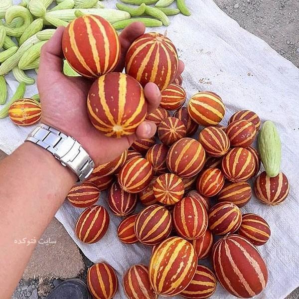 عکس میوه دستنبو شاماما با فواید
