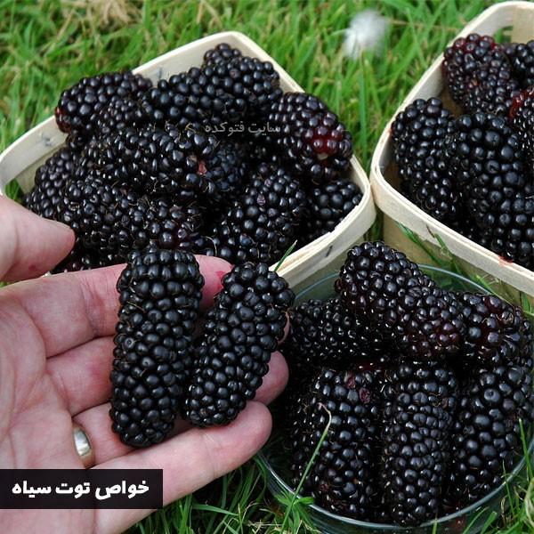 خاصیت توت سیاه در بارداری و دیابت و کلسترول