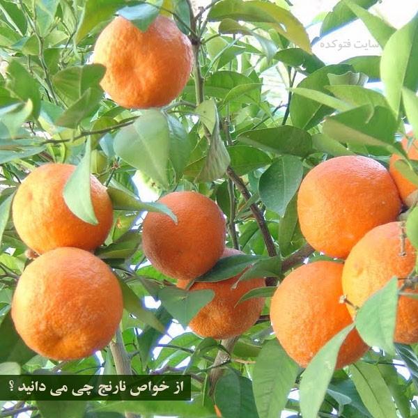 نارنج برای لاغری و سرماخوردگی
