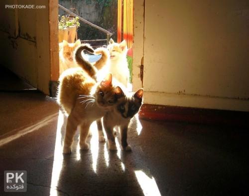 عکس بوس و بغل عاشقانه گربه ها,عکس های عاشقانه گربه ها بوس و بغل,عکس گربه ها,عکس عشق دو نفره گربه ها,عکس های گربه های عاشق,عکس عشق دو گربه,عکس بوس و بغل عاشقانه گربه ها,عکس گربه,عکس بوس و بغل عاشقانه گربه ها,عکس های زیبا از گربه ها,تصاویر عاشقانه گربه ها,زوج گربه عاشق,عشقولانه های گربه های عاشق