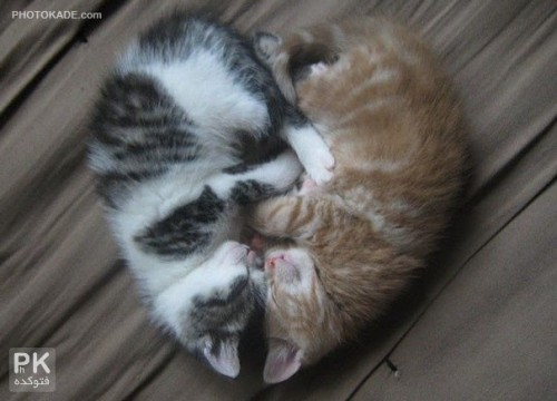 love-cats-photokade (11)