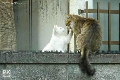 love-cats-photokade (12)