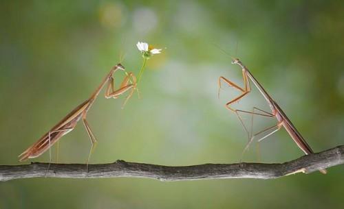 عکس جالب عشق درحشرات