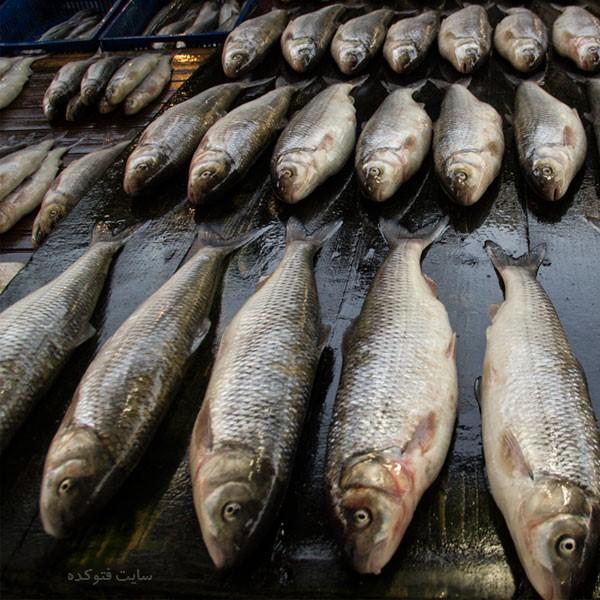 خاصیت ماهی سفید برای بارداری و لاغری و کاهش وزن و پوست